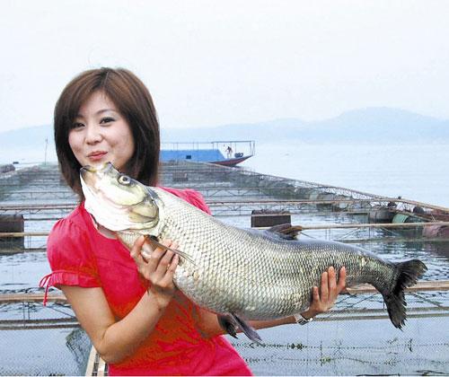 仙女湖有机翘嘴鱼