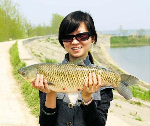 仙女湖有机草鱼